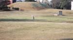 芝生広場に飛来した鷺
